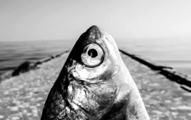"""Nuotrauka iš fotografo Tomo Tereko parodos """"Fish Eye"""", akimirka ant Kuršių marių molo Nidoje."""